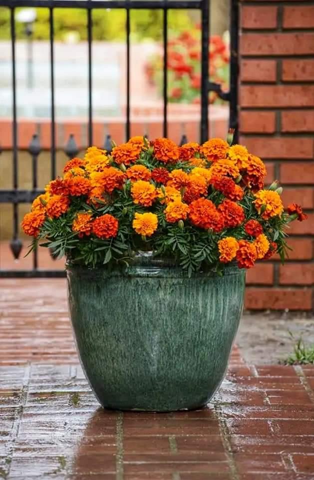 تخلصي من الطاقة السلبية بزراعة هذه النباتات في المنزل
